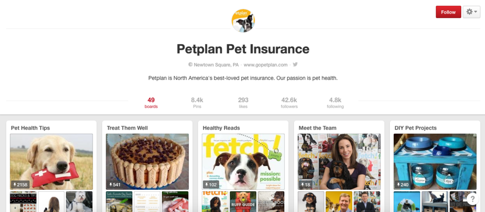 Petplan insurance on Pinterest