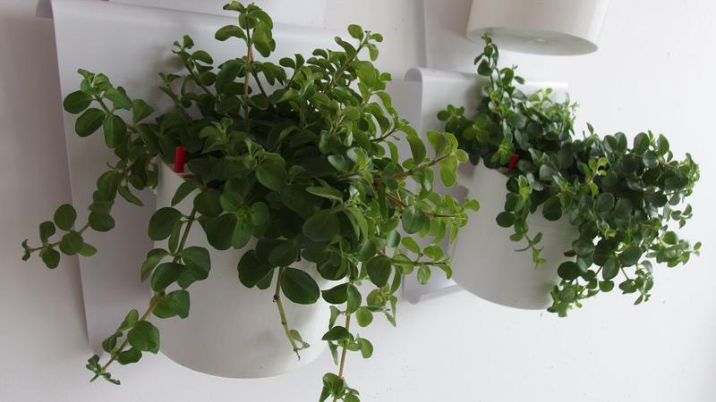 Vanzha-planters-01.jpg