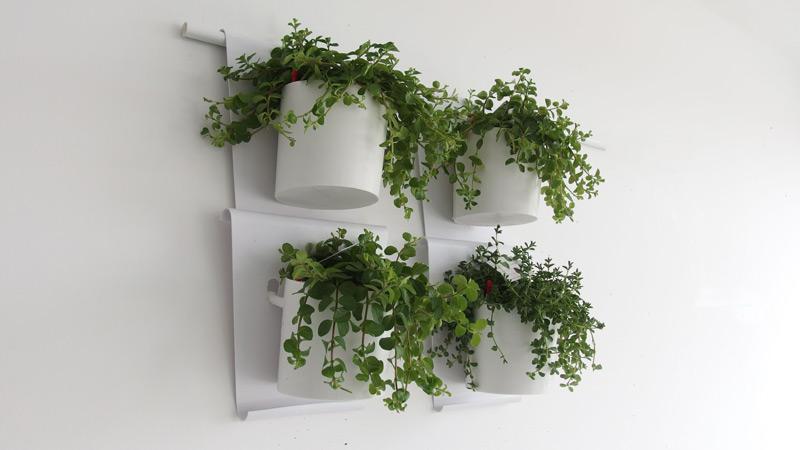 Vanzha-planters-05.jpg