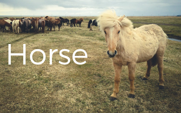 horse-thumb.jpg