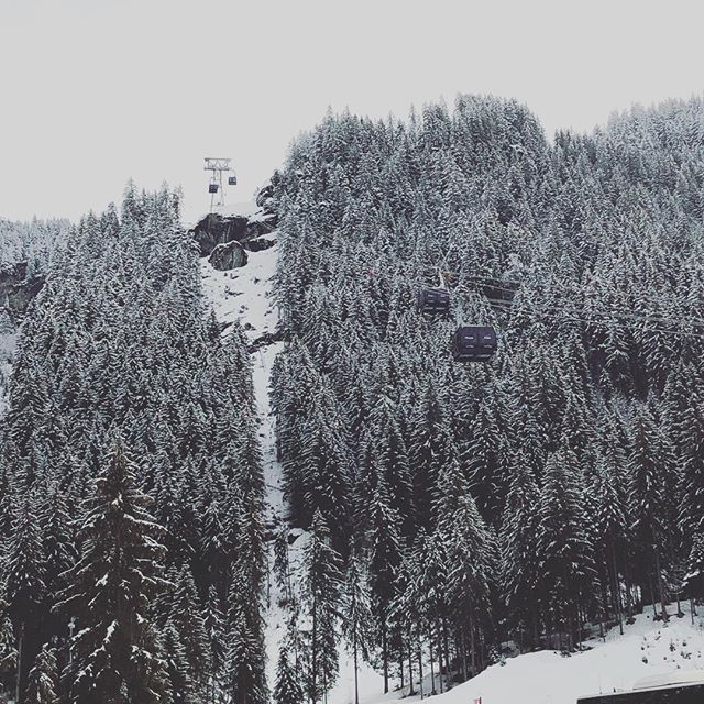 Mountainous trees with a dusting of snow...🌲❄️ These are a few of our favourite things!🎶 #favouritethings #snowcoveredtrees #dustingofsnow #treeline #snowline #powder #snowfall #morzine #meribel #tgski