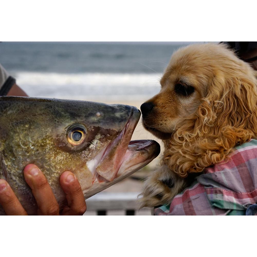 social-puppy-fish.jpg