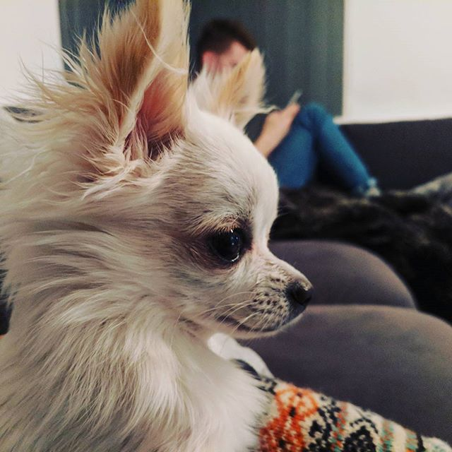 The little cutiepie is as adorable as she looks (as is my cutiepie in the background) @poppythechi 💛