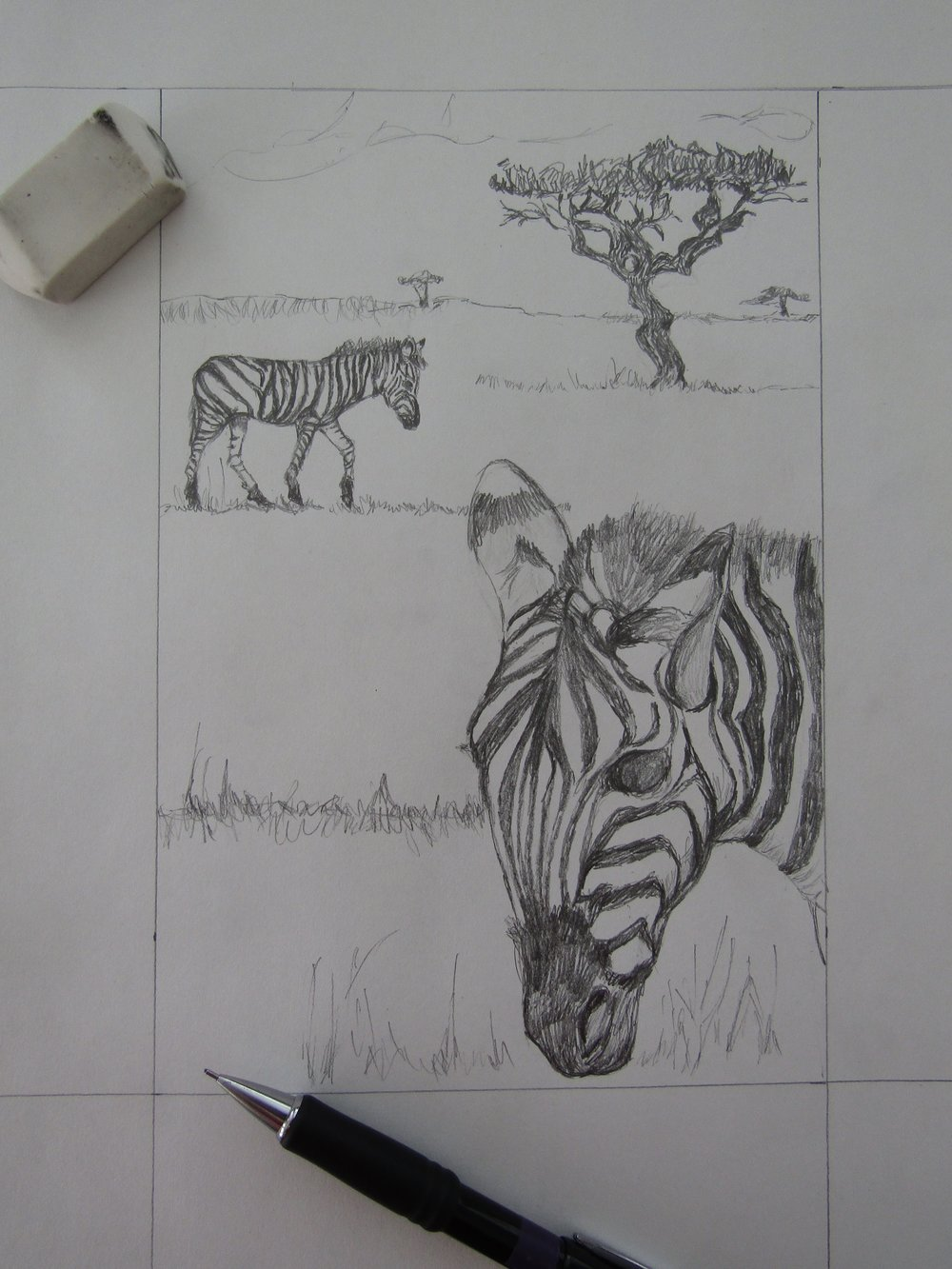 I combined various pictures I took of zebras and acacia trees for this drawing.