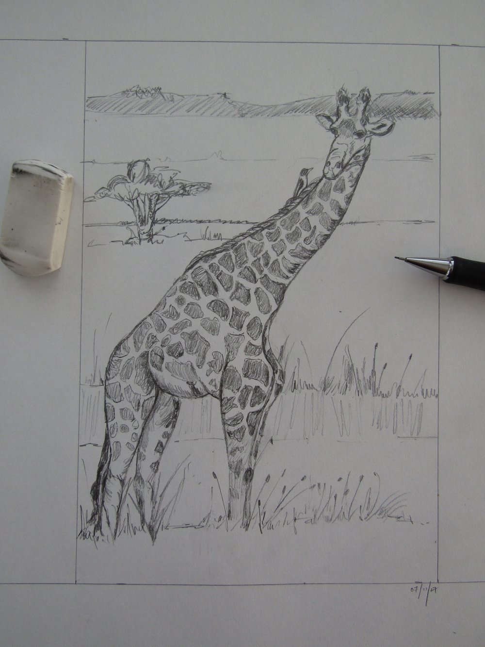 I just had to put the little bird on the giraffe's back - something that often happens. They eat insects off of the giraffes - while 'hitching' a ride!
