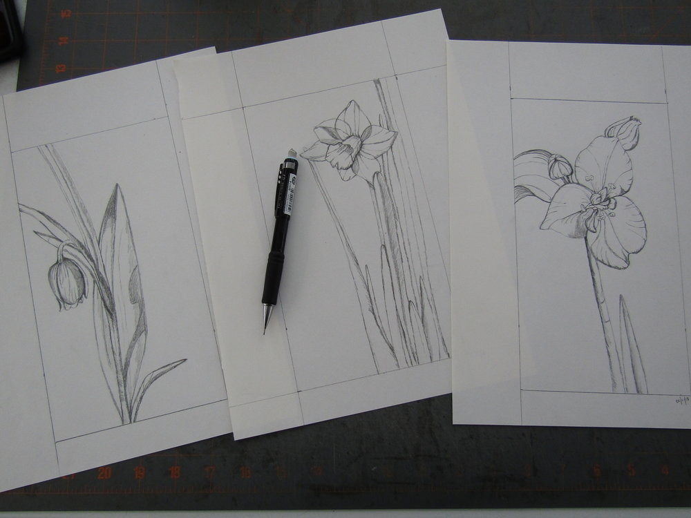 My process begins with pencil drawings. Here are a few - a Fritilaria, Daffodil, and Spiderwort. I enjoy drawing with pencil, since it allows me to study form, line,  and composition.