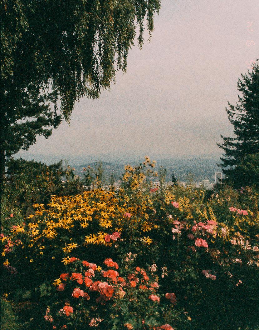 Flower garden by  Lon.