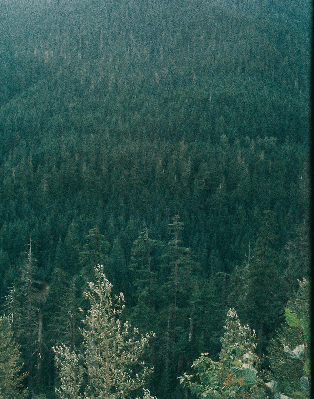 Trees in eastern Washington by  Lon.
