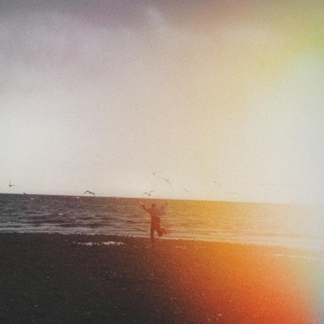 ©  Lonnie Webb    Chasing seagulls
