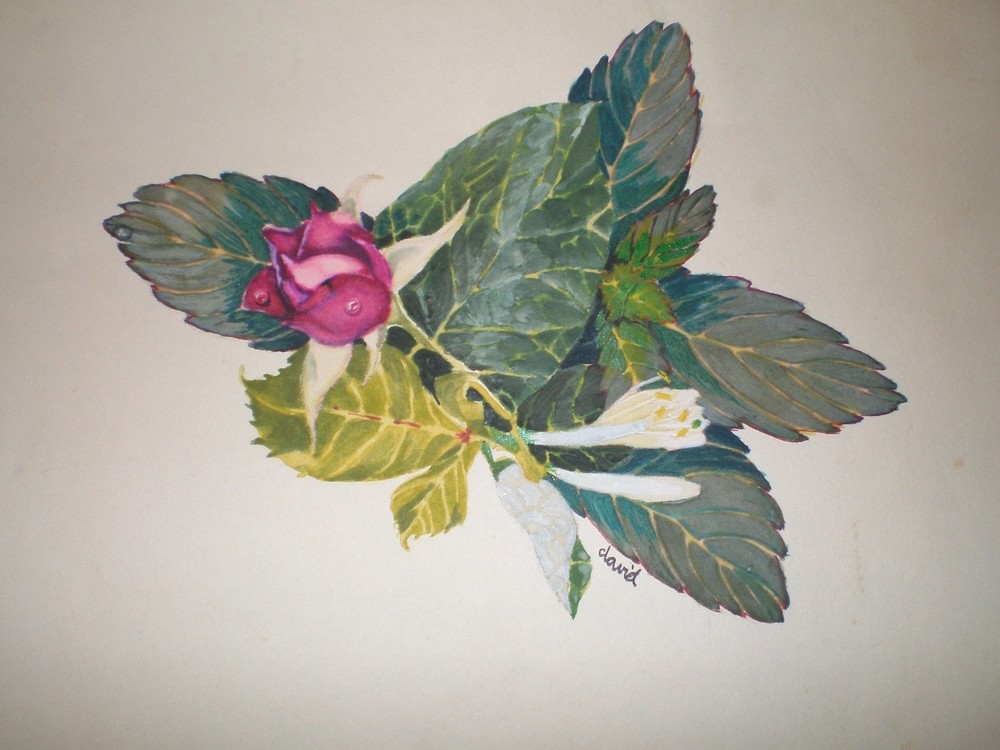 "Untitled ""Rose and Honeysuckle"""