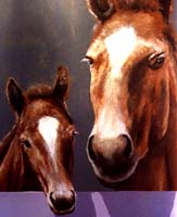 horse_233.jpg