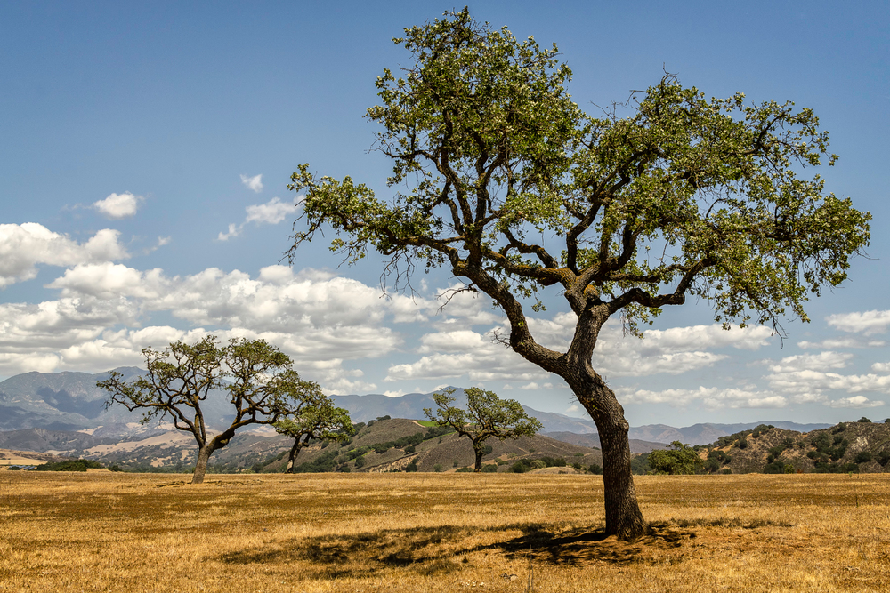 California's Serengeti