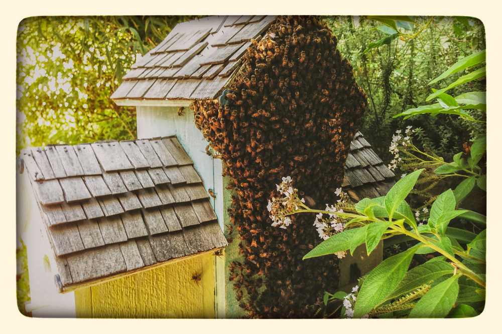 Honeycolony. Bee. Wasim Muklashy Photography