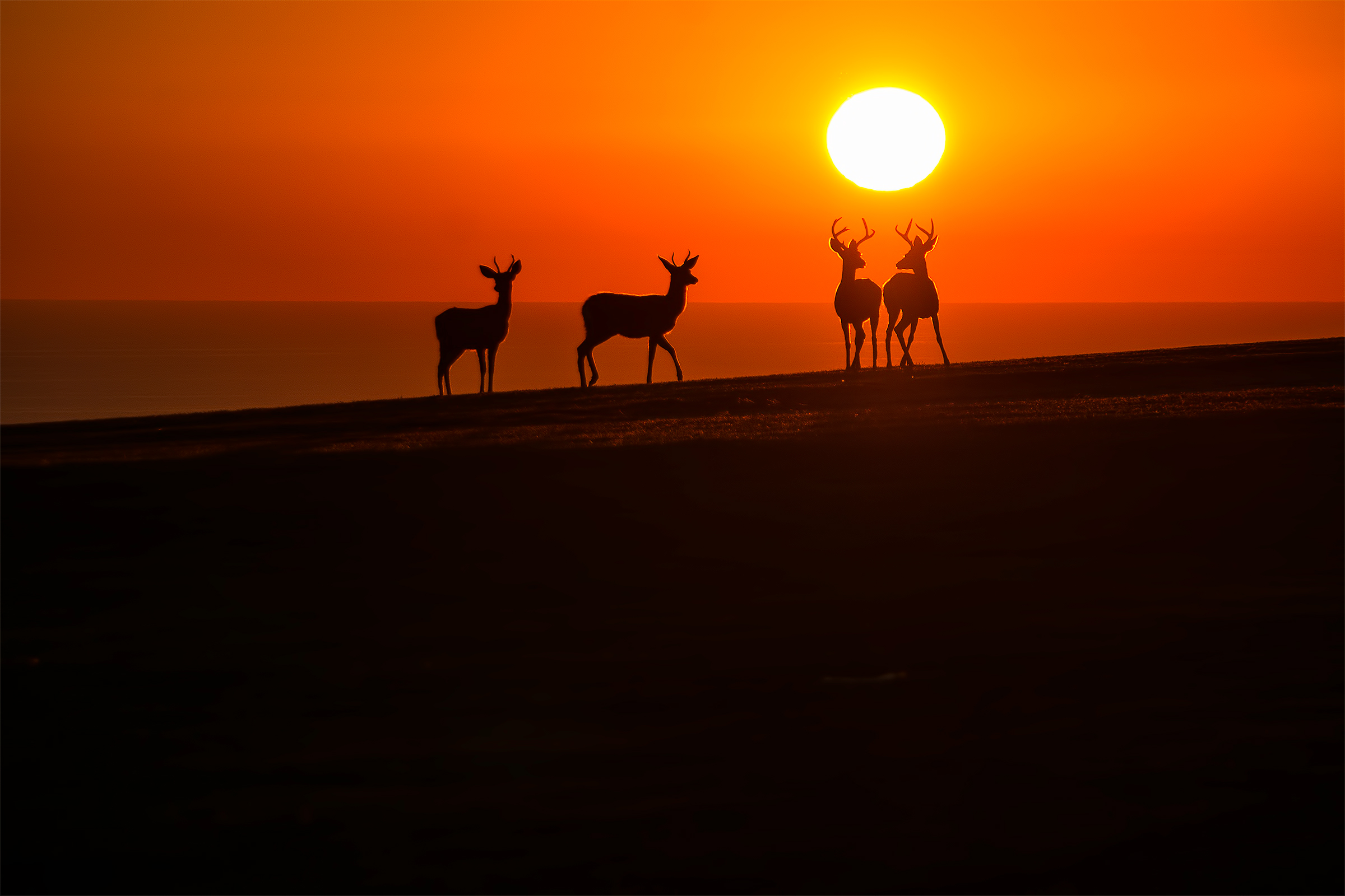 PCH_Deer_Sunset_Silhouette_Samsung_NX300_Wasim Muklashy Photography