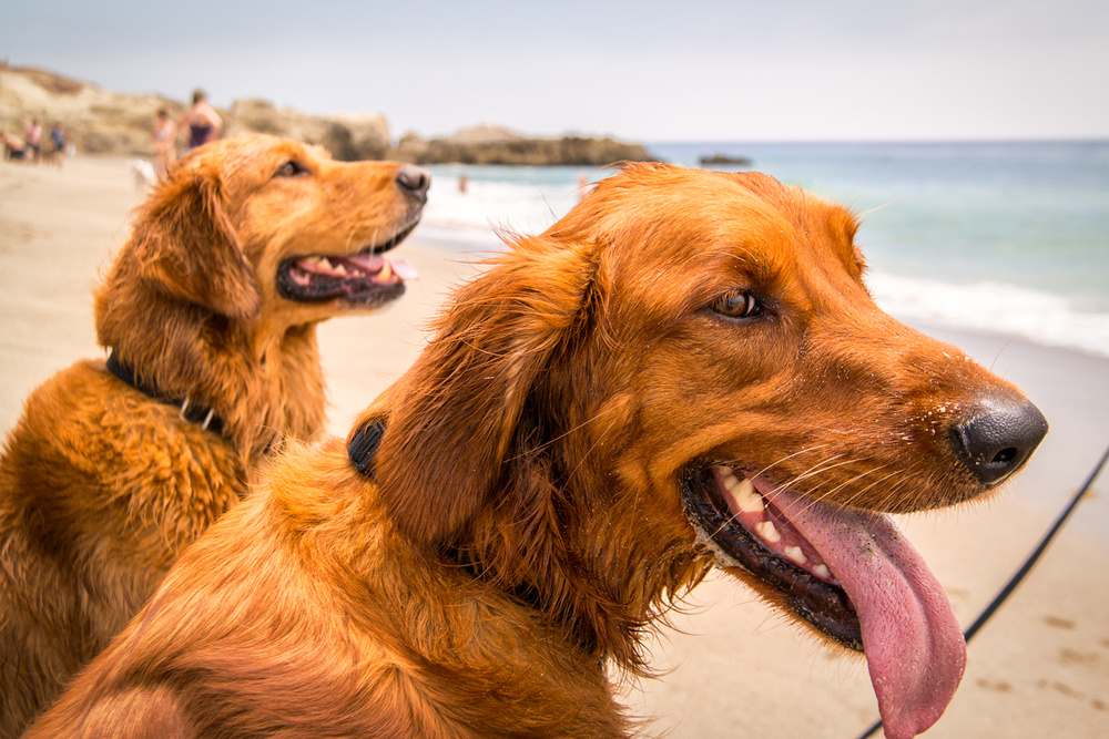 Wasim Muklashy Photography_Pet Photography_Dogs_Ocean Walk Pet Sitting