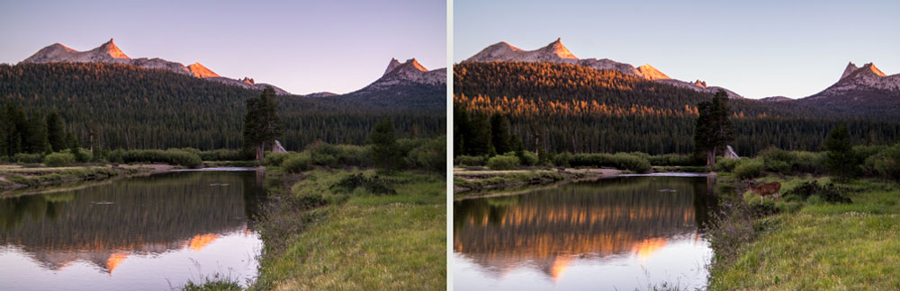 Wasim-Muklashy-Photography_Tuolumne-Meadows_Yosemite_National-Park_Deer-Composite-Tutorial_Comp