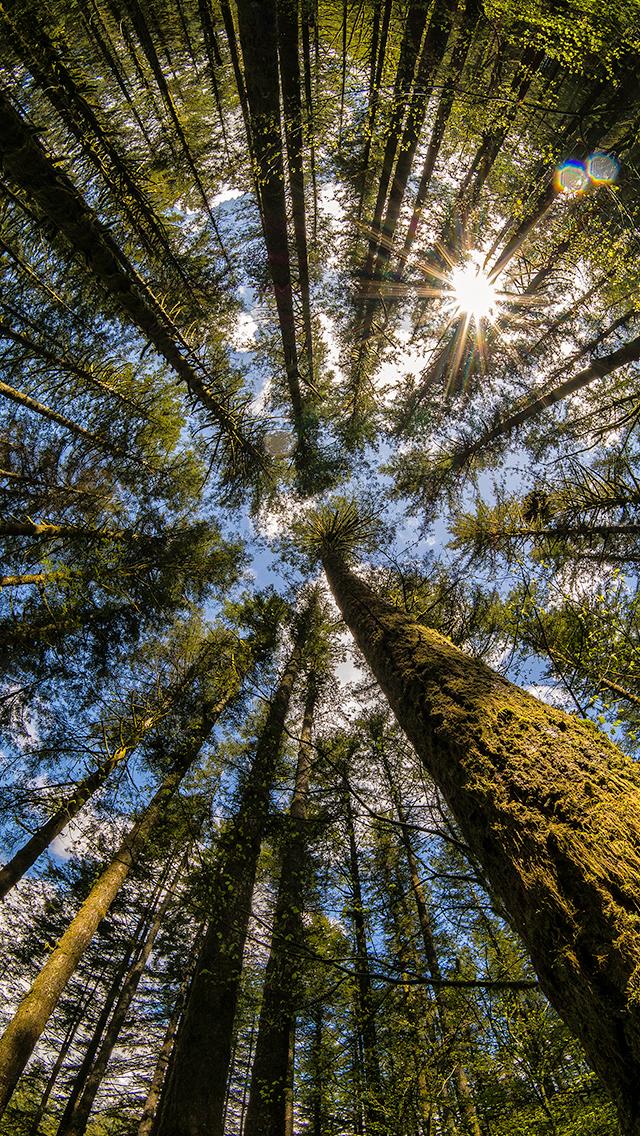 Wasim_Muklashy_Eye In The Sky_Washington_iPhone6