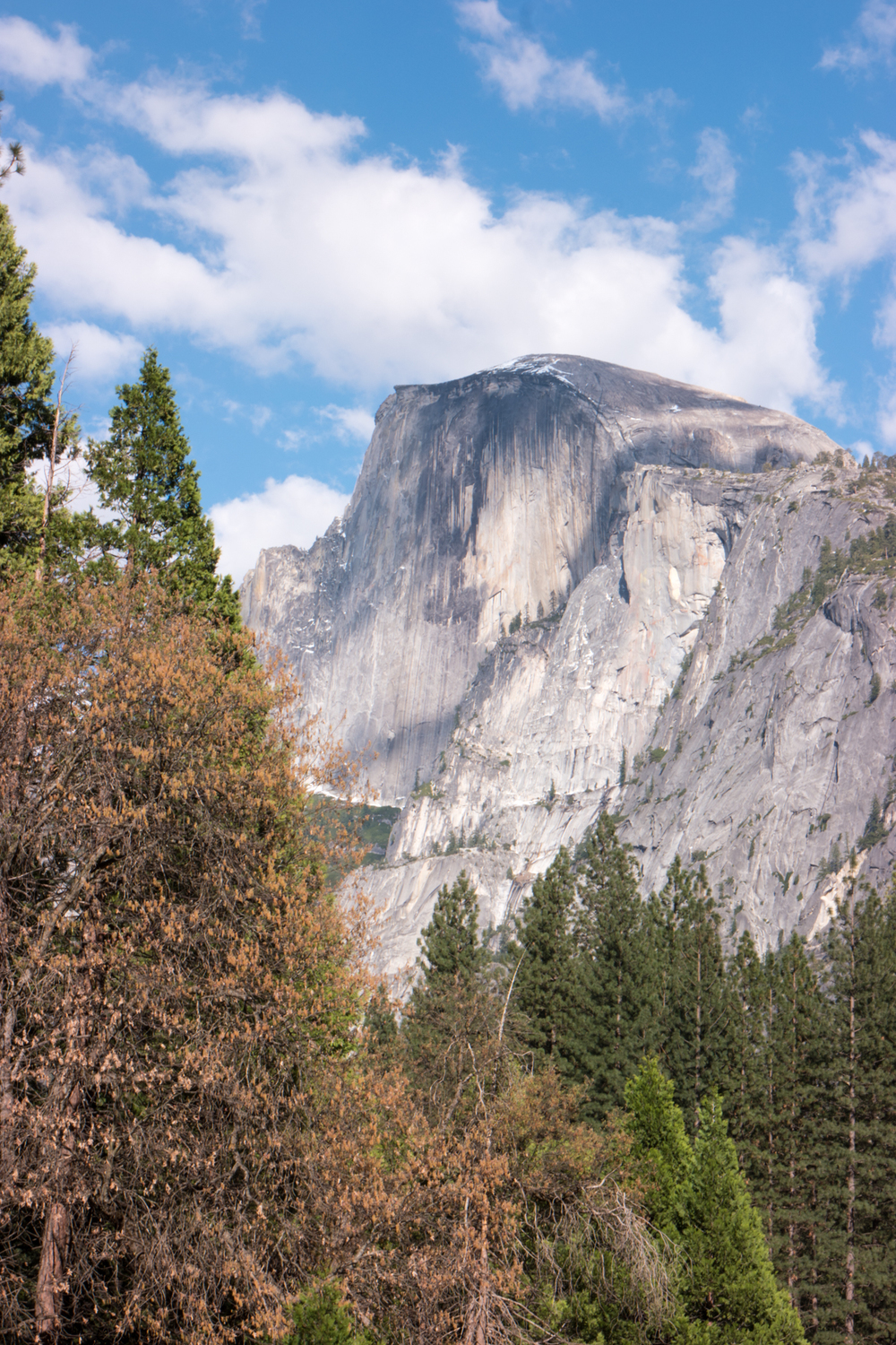 Wasim Muklashy Photography_April 2015_Yosemite_California_Samsung NX1_ SAM_1808_1800px.jpg