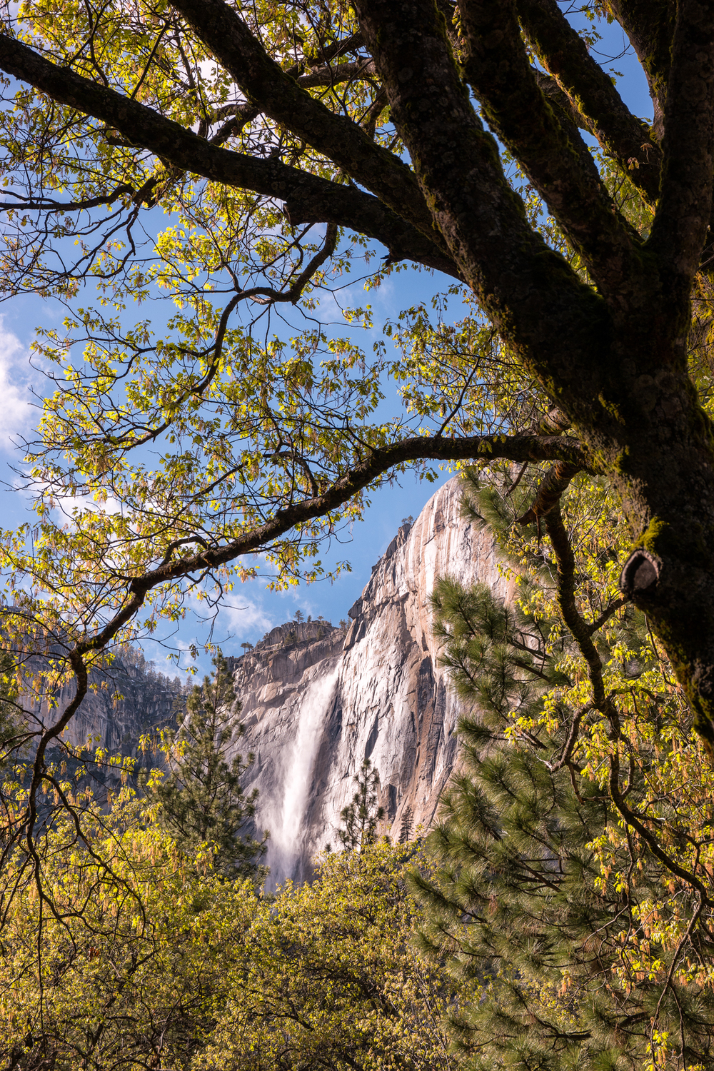 Wasim Muklashy Photography_April 2015_Yosemite_California_Samsung NX1_ SAM_7964_1800px.jpg