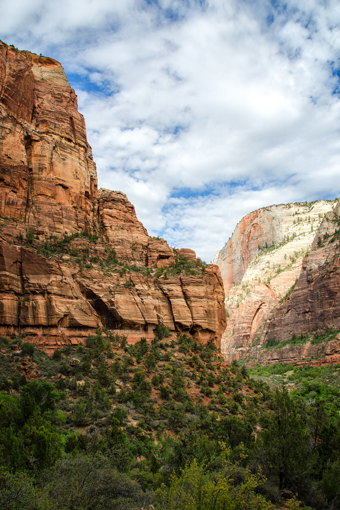 Wasim Muklashy Photography_Zion National Park_Utah_03.jpg