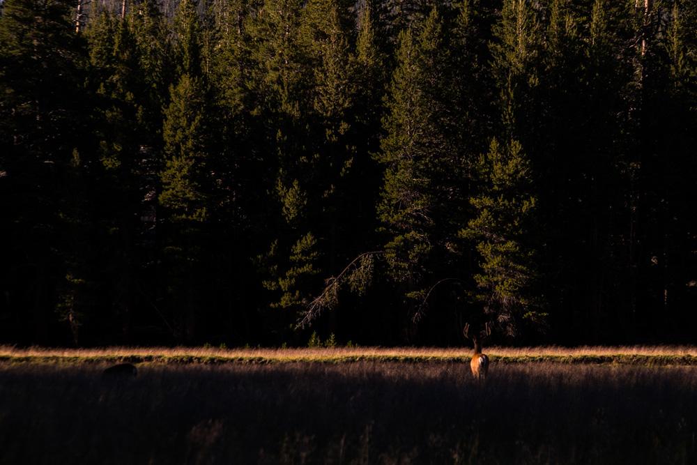 Wasim-Muklashy-Photography_Wasim-Of-Nazareth_Tuolomne-Meadows_Yosemite_CA_Samsung-NX30_-SAM_1316_1500.jpg