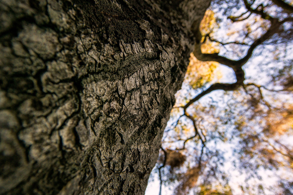 Wasim Muklashy Photography_Hiking_Topanga Canyon_California_02.jpg