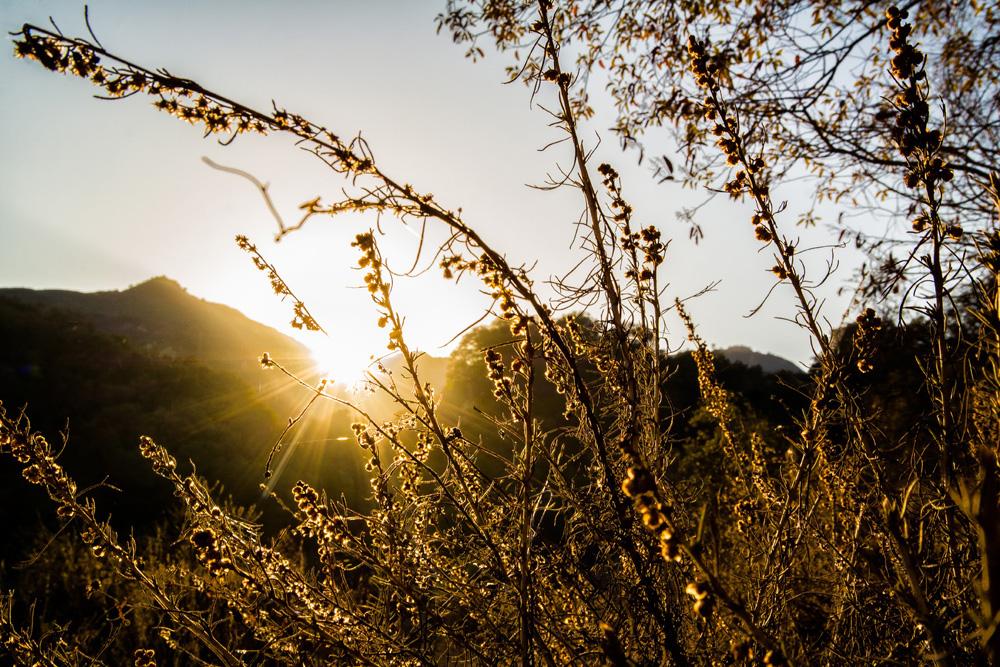 Wasim Muklashy Photography_Hiking_Topanga Canyon_California_05.jpg