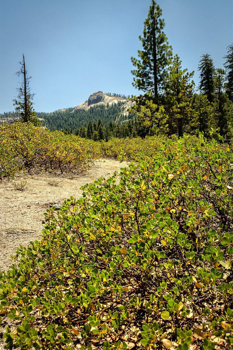 Wasim-Muklashy-Photography_Far-Meadow_Yosemite_California_32.jpg