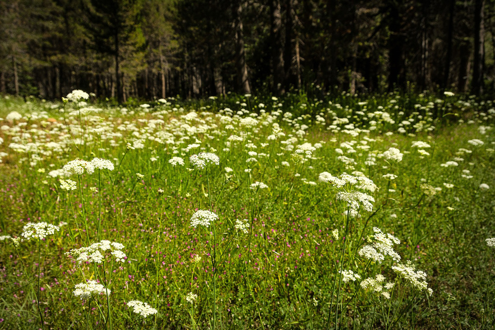 Wasim-Muklashy-Photography_Far-Meadow_Yosemite_California_46.jpg
