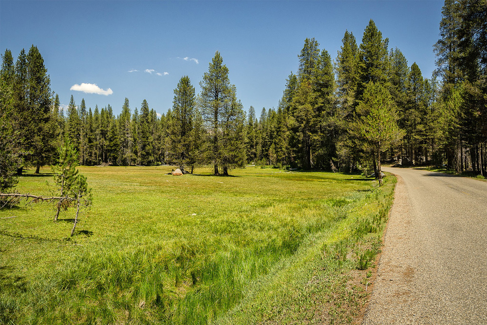 Wasim-Muklashy-Photography_Far-Meadow_Yosemite_California_49.jpg