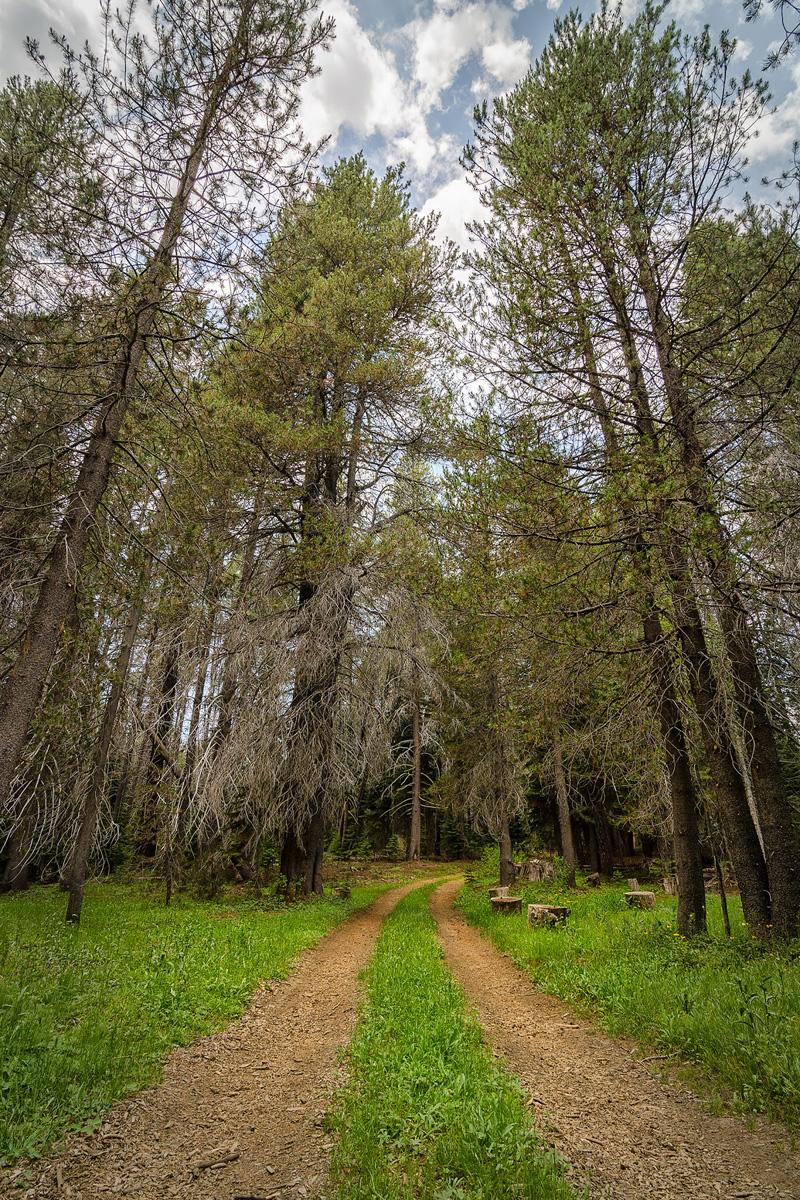 Wasim-Muklashy-Photography_Far-Meadow_Yosemite_California_19.jpg