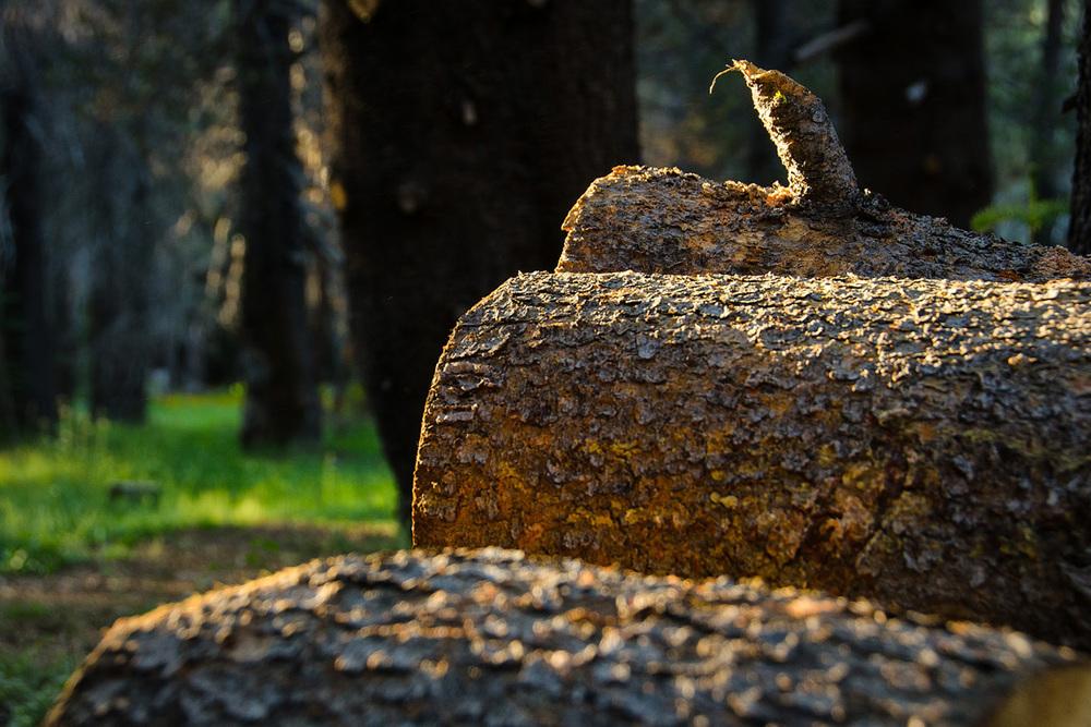 Wasim-Muklashy-Photography_Far-Meadow_Yosemite_California_30.jpg