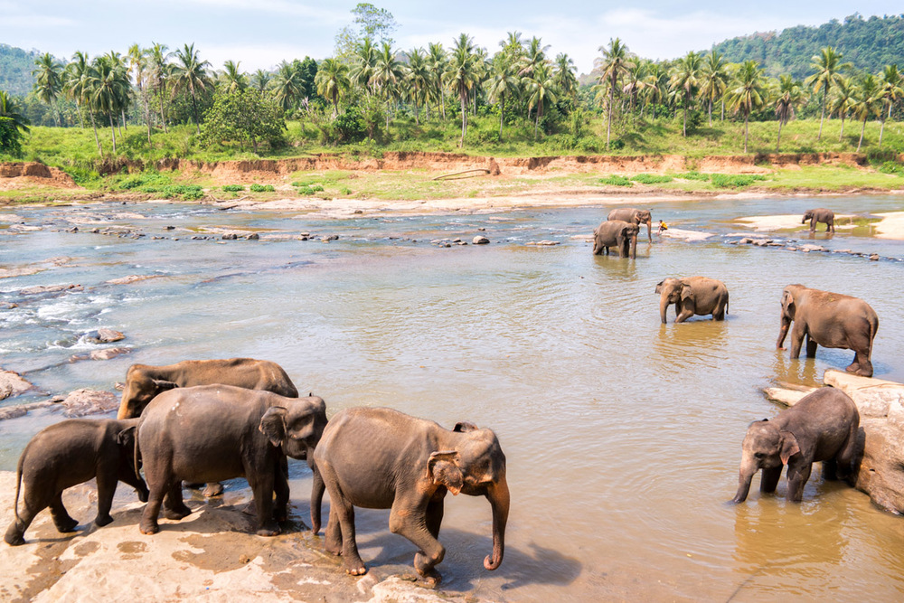 Pinnawala Elephant Orphanage, Sri Lanka