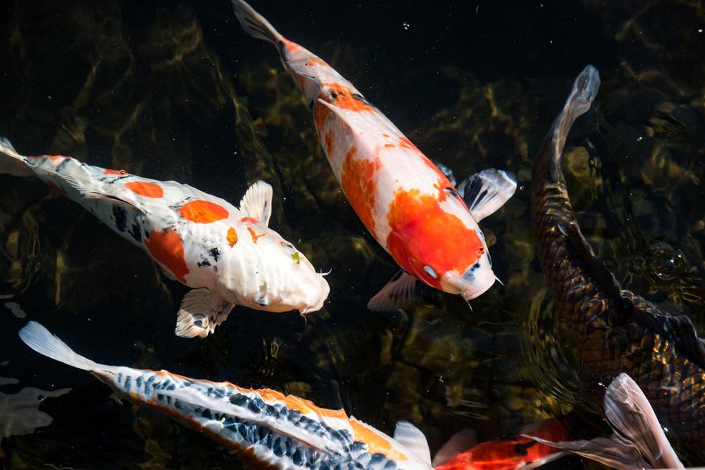 Wasim Muklashy Photography_Samsung NX1_Japanese Garden_Portland_Oregon_ SAM_6457.jpg