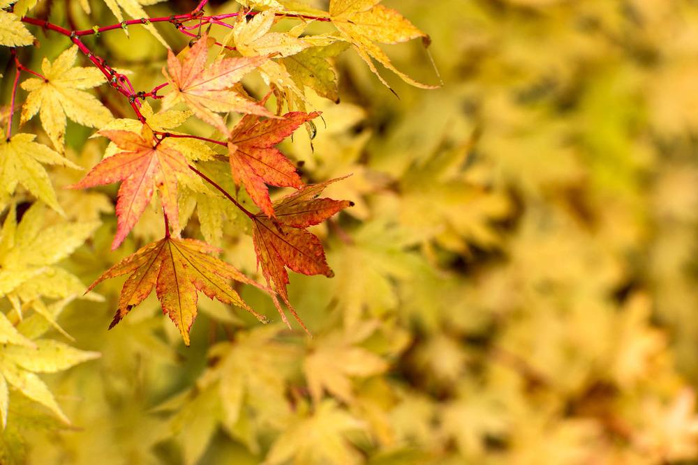 Wasim Muklashy Photography_Samsung NX1_Portland_Oregon_--2.jpg