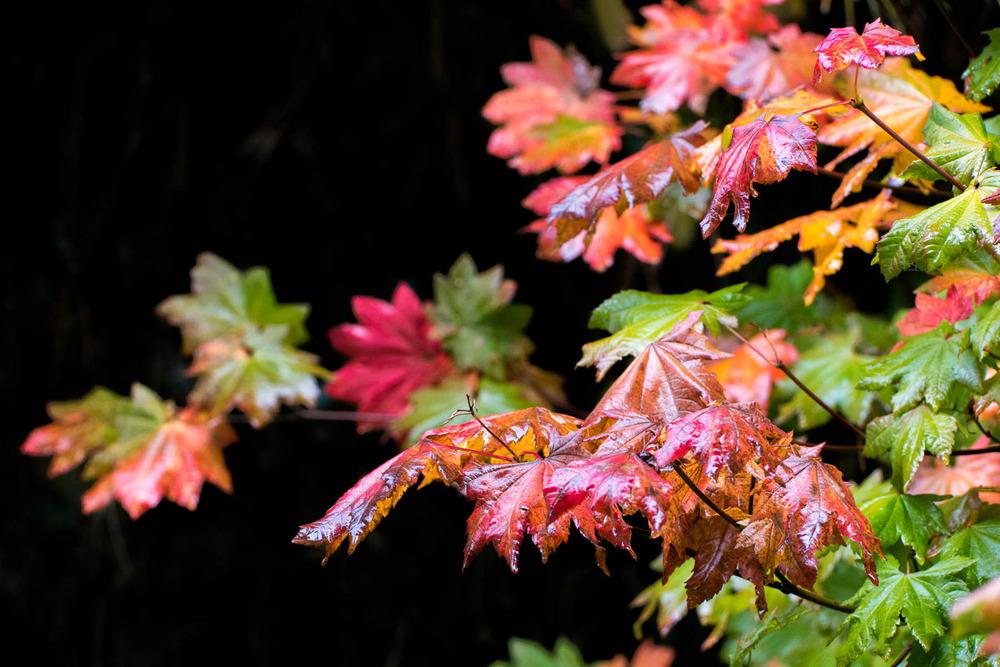 Wasim Muklashy Photography_Samsung NX1_Portland_Oregon_--6.jpg