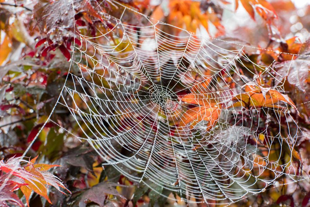 Wasim Muklashy Photography_Samsung NX1_Portland_Oregon_6.jpg