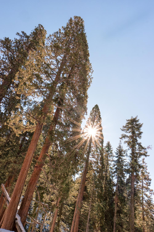 Wasim Muklashy Photography_Sequoia National Park_California_December 2015_-SAM_4570-Edit.jpg