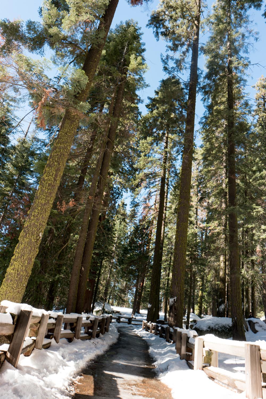 Wasim Muklashy Photography_Sequoia National Park_California_December 2015_-SAM_4586.jpg