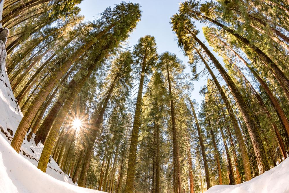 Wasim Muklashy Photography_Sequoia National Park_California_December 2015_-SAM_4611-Edit.jpg