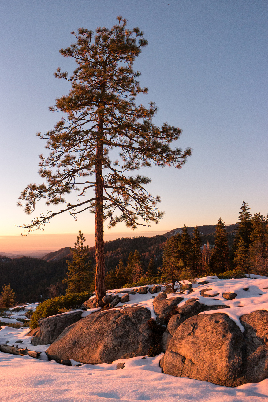 Wasim Muklashy Photography_Sequoia National Park_California_December 2015_-SAM_4651-Edit-2.jpg