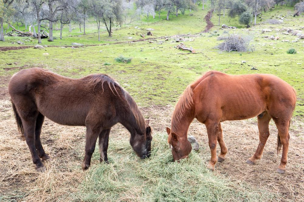 Wasim Muklashy Photography_Sequoia National Park_California_December 2015_-SAM_4713.jpg