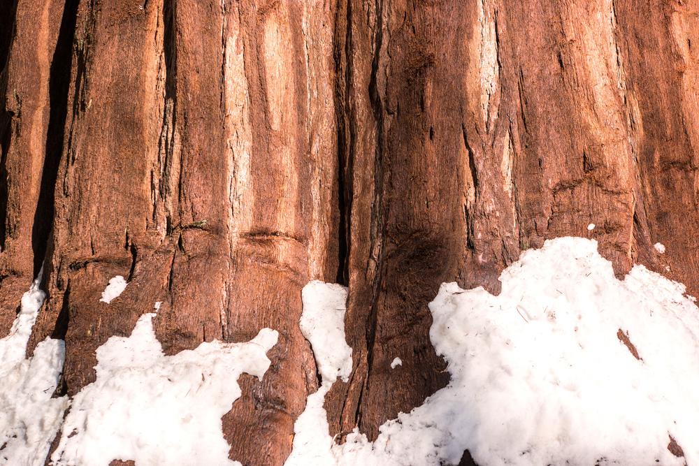 Wasim Muklashy Photography_Sequoia National Park_California_December 2015_-SAM_3923-Edit.jpg