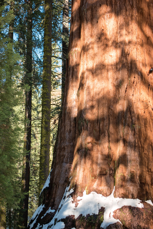Wasim Muklashy Photography_Sequoia National Park_California_December 2015_-SAM_3935-Edit.jpg