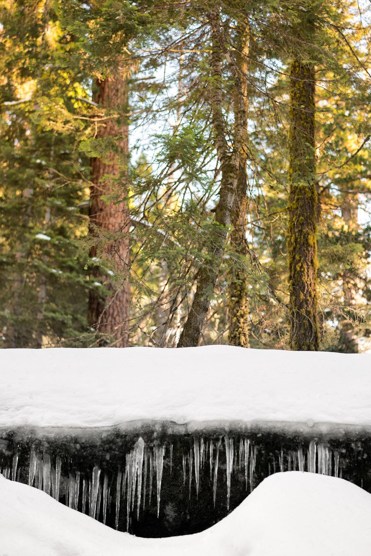 Wasim Muklashy Photography_Sequoia National Park_California_December 2015_-SAM_3953-Edit.jpg