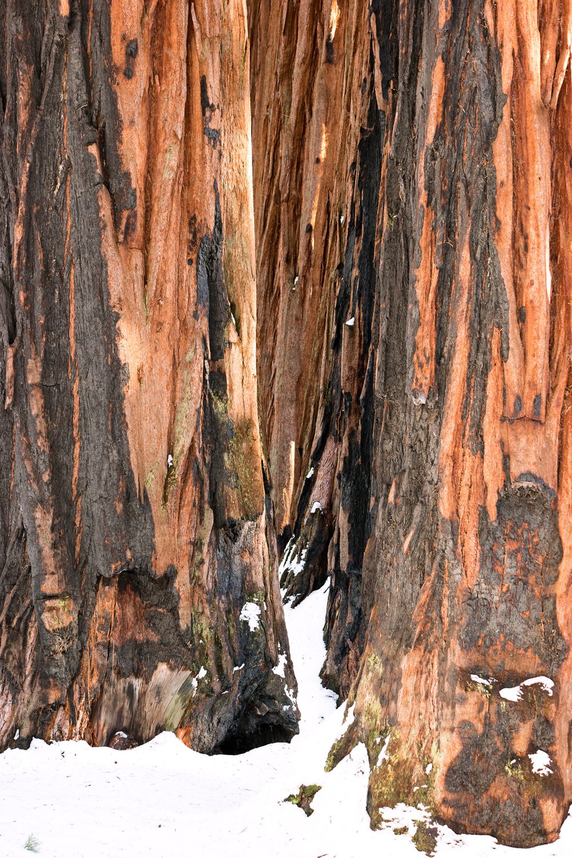 Wasim Muklashy Photography_Sequoia National Park_California_December 2015_-SAM_4026-Edit.jpg