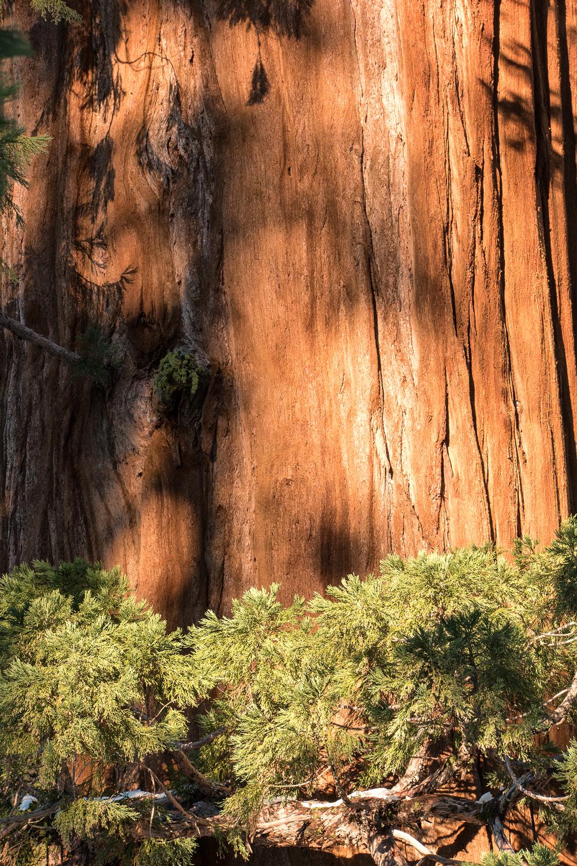 Wasim Muklashy Photography_Sequoia National Park_California_December 2015_-SAM_4108-Edit.jpg