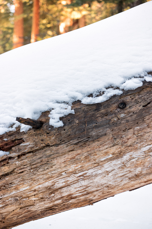 Wasim Muklashy Photography_Sequoia National Park_California_December 2015_-SAM_4146-Edit.jpg