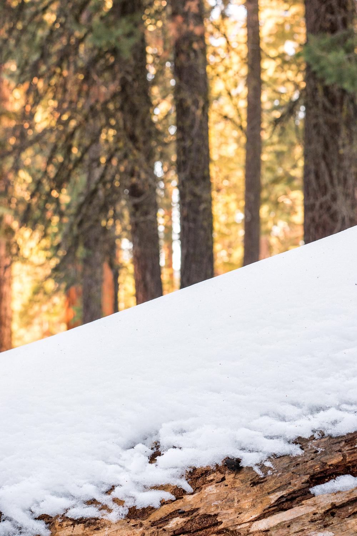 Wasim Muklashy Photography_Sequoia National Park_California_December 2015_-SAM_4130-Edit.jpg