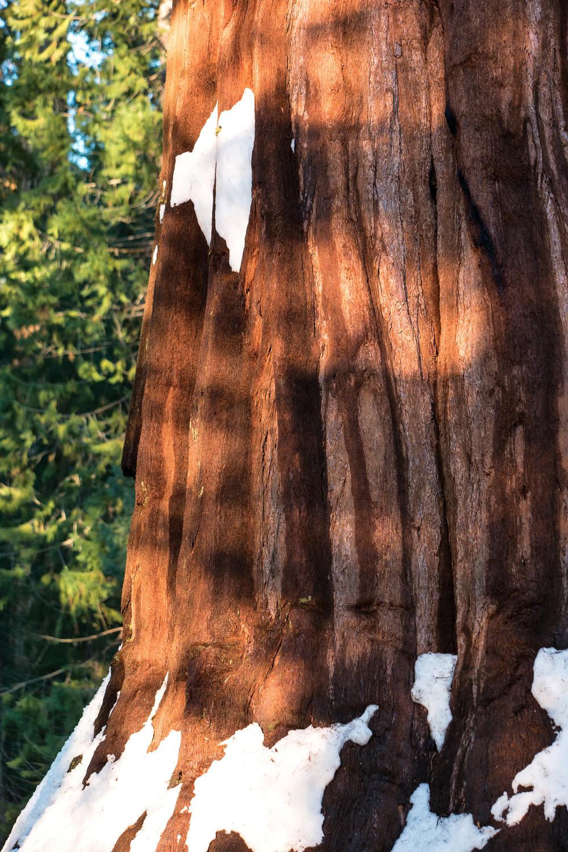 Wasim Muklashy Photography_Sequoia National Park_California_December 2015_-SAM_4155-Edit.jpg